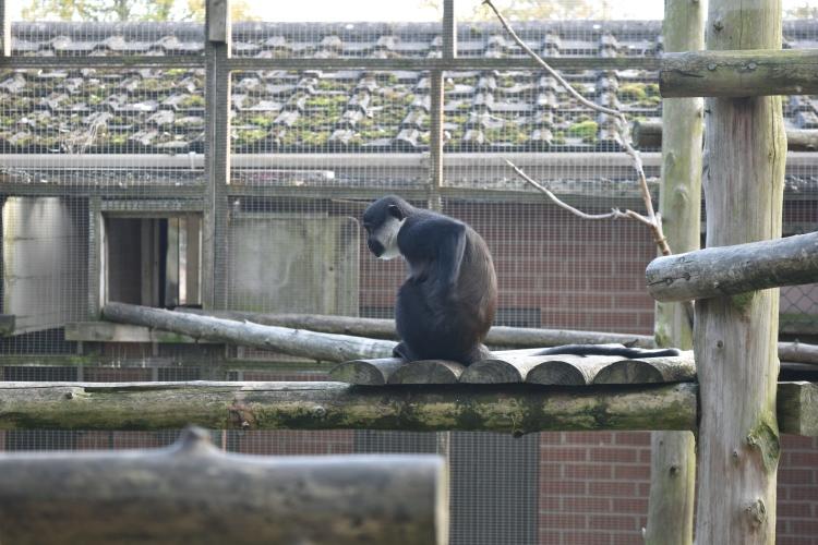 twycross-zoo-10