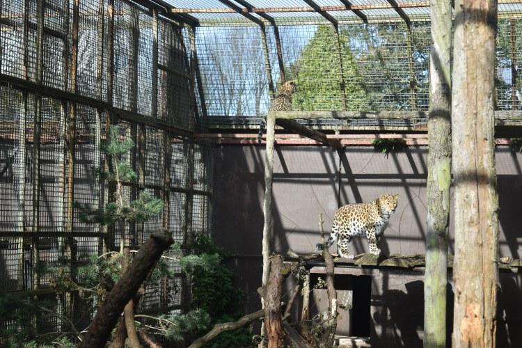 twycross-zoo-23