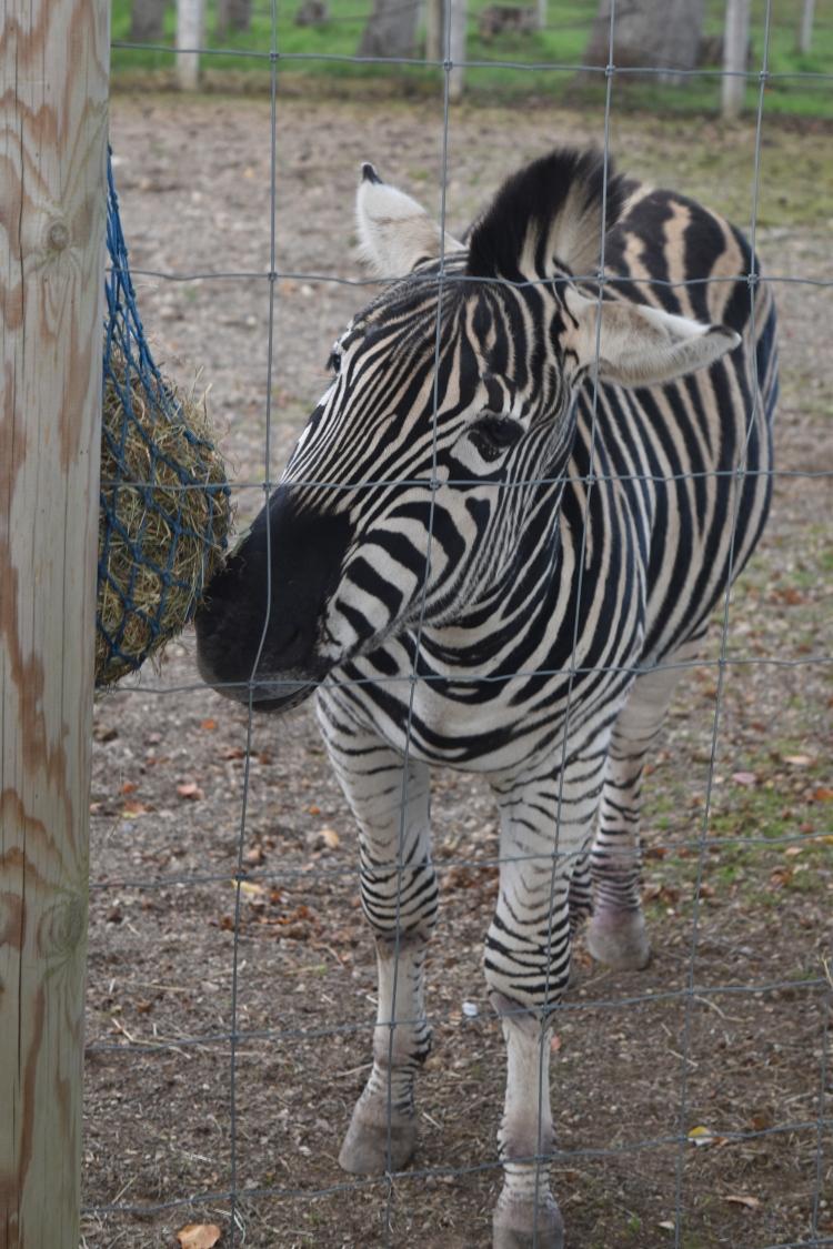 twycross-zoo-26