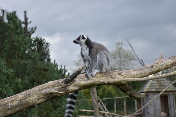 twycross-zoo-28