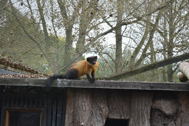 twycross-zoo-44