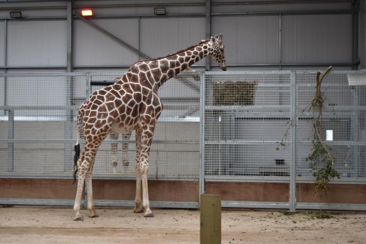 twycross-zoo-49